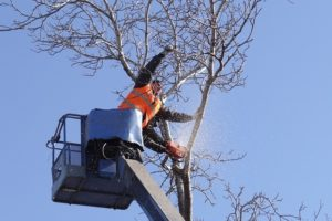 tree cutting and removal with equipment. Call us for tree removal in Oahu